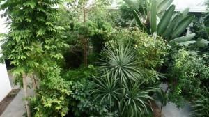 padova-orto-botanico-23-870x490